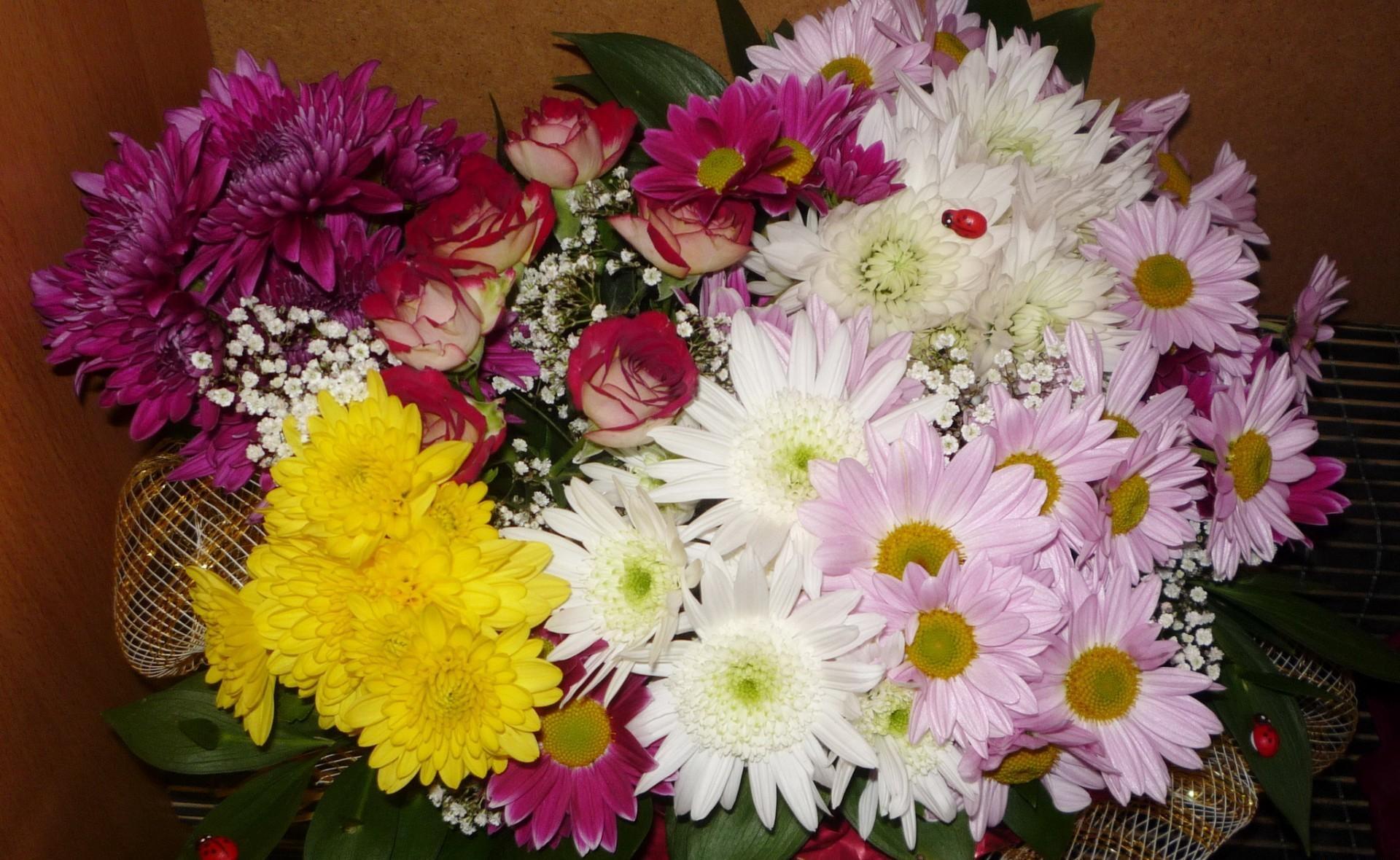 137217 скачать обои Хризантемы, Цветы, Розы, Божьи Коровки, Оформление, Букет - заставки и картинки бесплатно