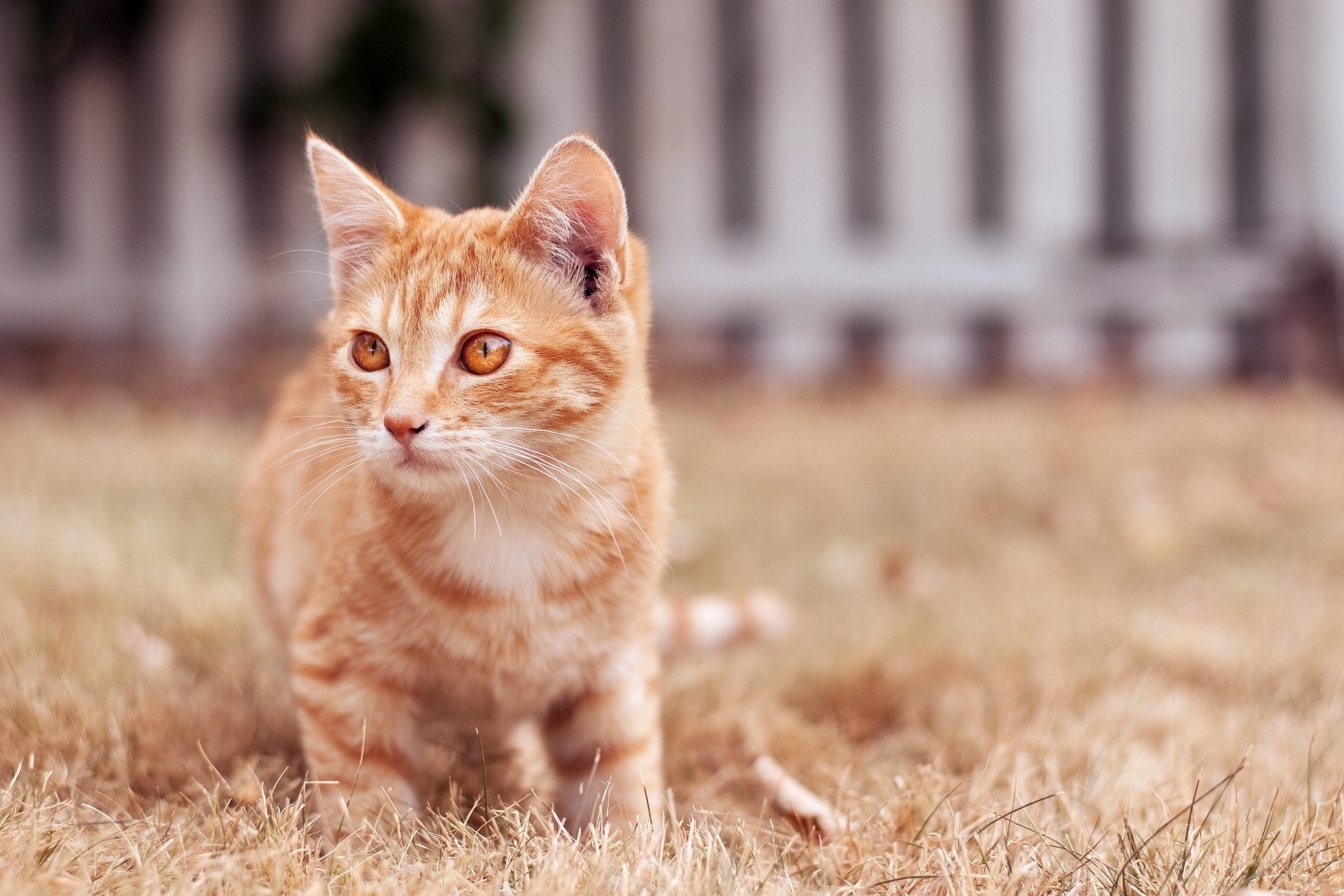 133512 download wallpaper Animals, Kitty, Kitten, Cat, Muzzle, Sight, Opinion screensavers and pictures for free