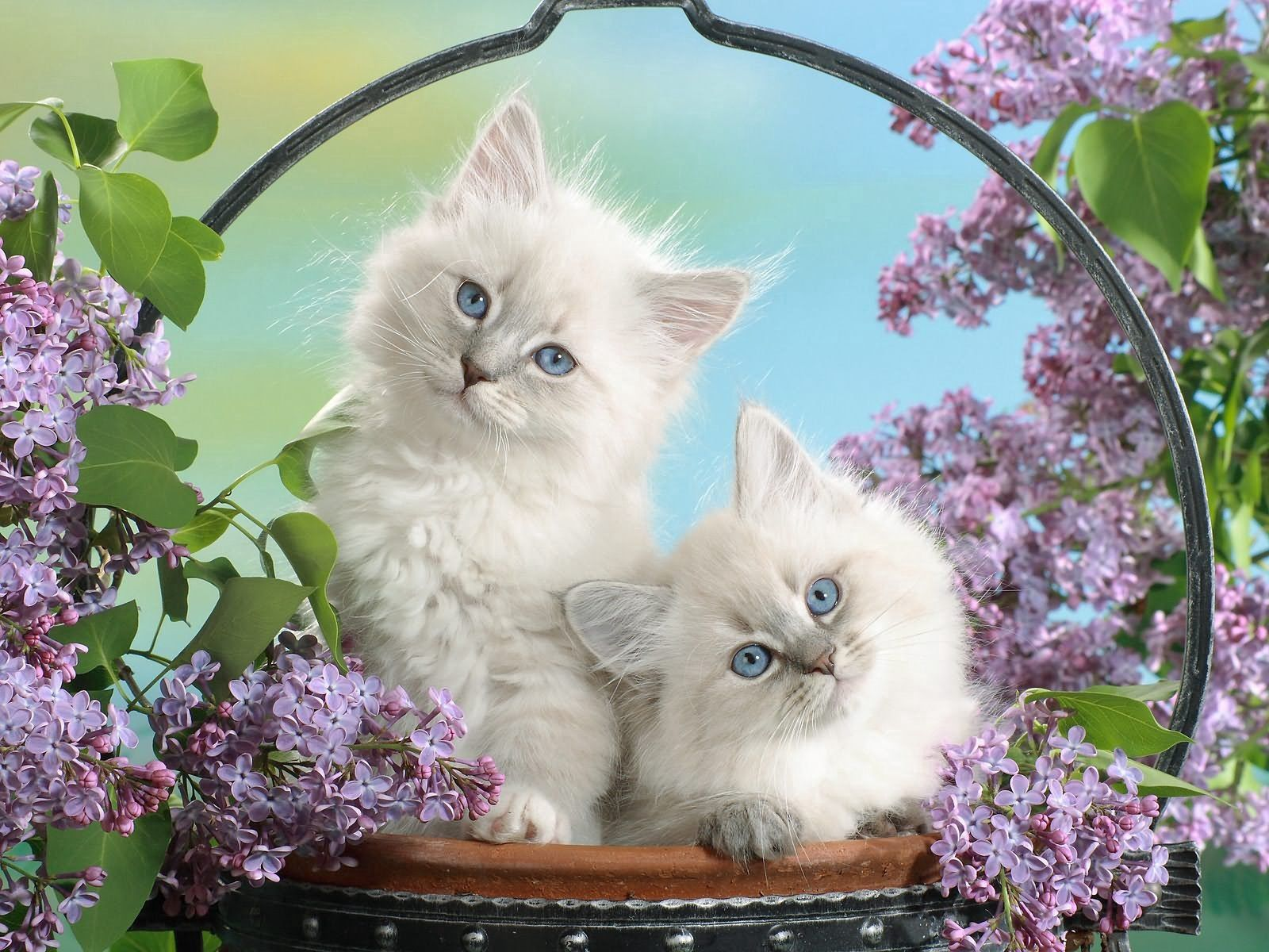 133094 download wallpaper Animals, Leaves, Sit, Fluffy, Basket, Kittens screensavers and pictures for free