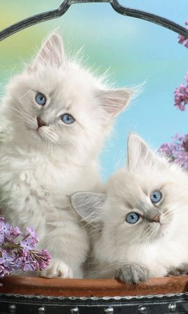 133094 download wallpaper Animals, Kittens, Basket, Leaves, Sit, Fluffy screensavers and pictures for free