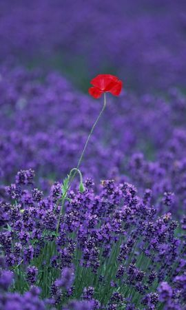 46109 descargar fondo de pantalla Plantas, Flores, Los Campos: protectores de pantalla e imágenes gratis