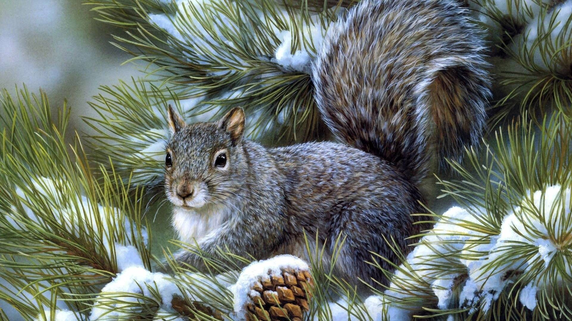 95631 Screensavers and Wallpapers Squirrel for phone. Download Animals, Squirrel, Wood, Sit, Tree, Spruce, Fir pictures for free