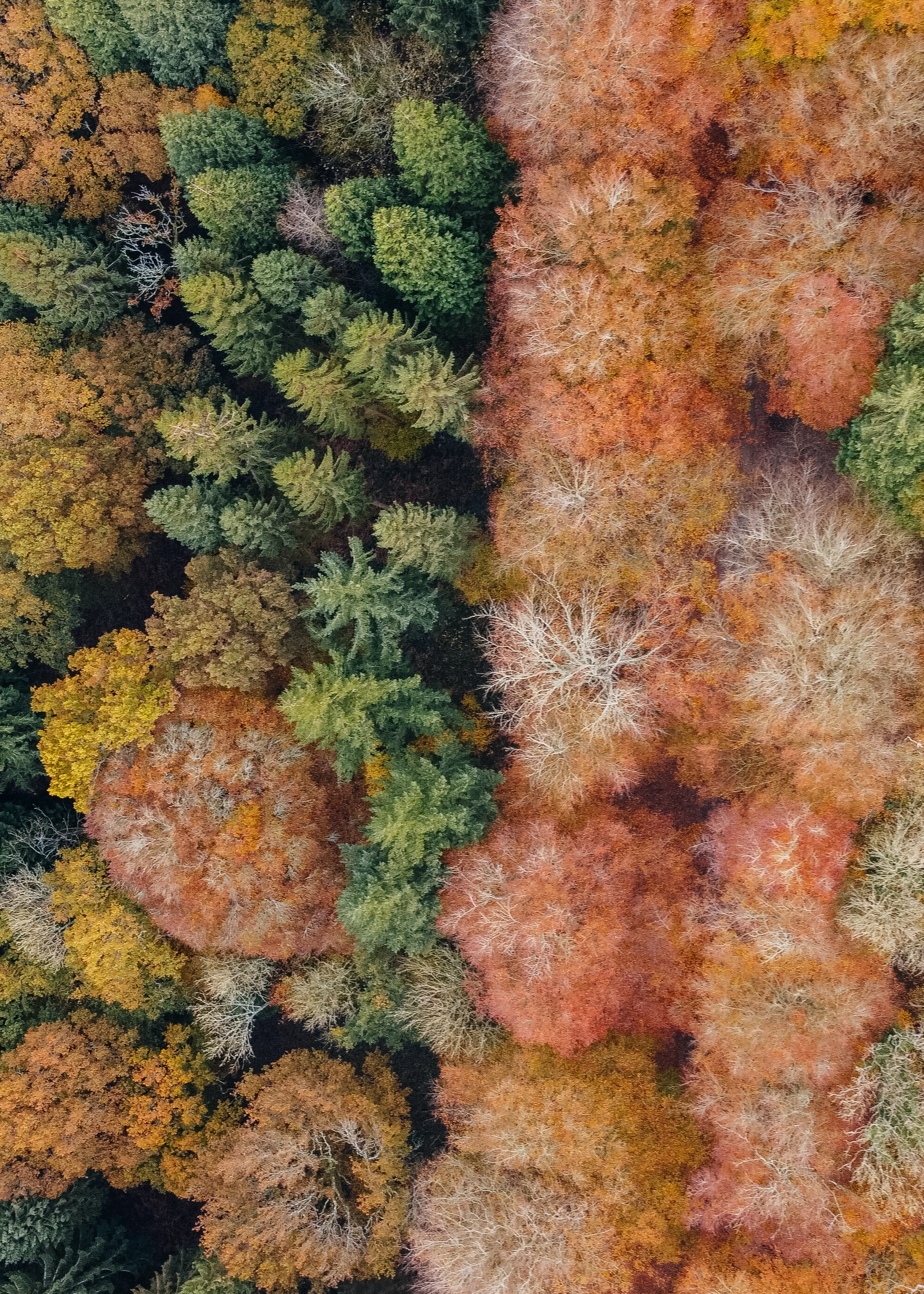 148815 download wallpaper Trees, View From Above, Forest, Autumn, Nature screensavers and pictures for free