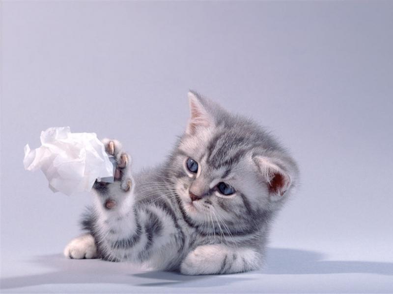 35625 скачать обои Животные, Кошки (Коты, Котики) - заставки и картинки бесплатно