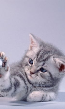 35625 download wallpaper Animals, Cats screensavers and pictures for free