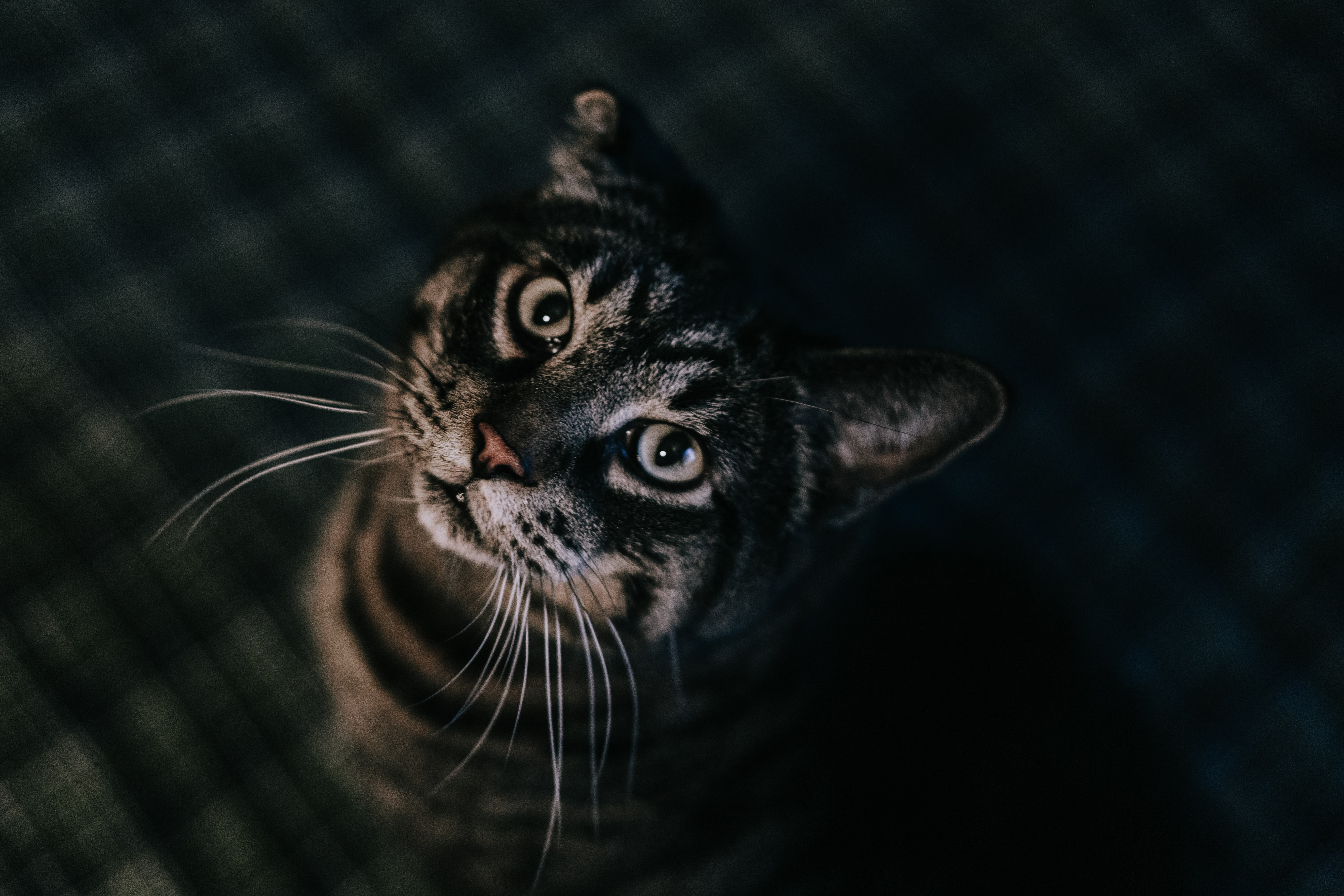 104999 download wallpaper Animals, Cat, Brown, Tabby, Pet screensavers and pictures for free
