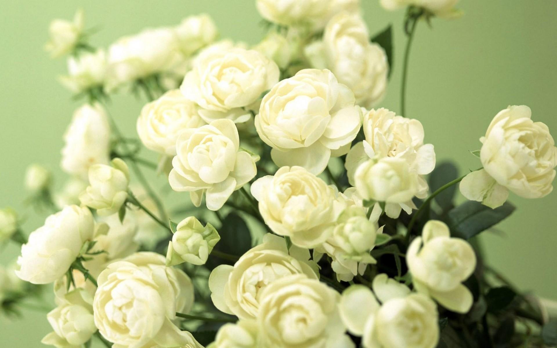 12528 скачать обои Растения, Цветы, Розы - заставки и картинки бесплатно