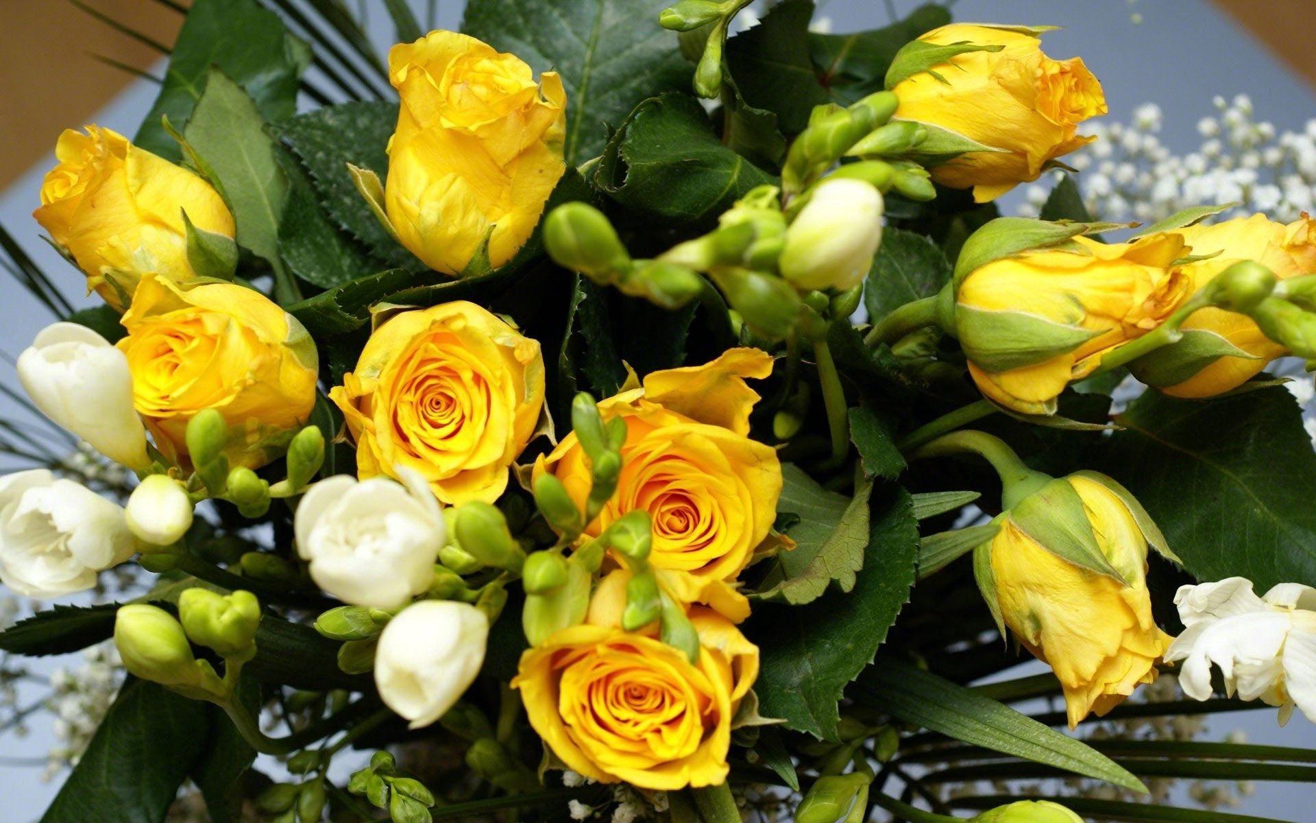115251 скачать обои Цветы, Букет, Листья, Красота, Розы - заставки и картинки бесплатно