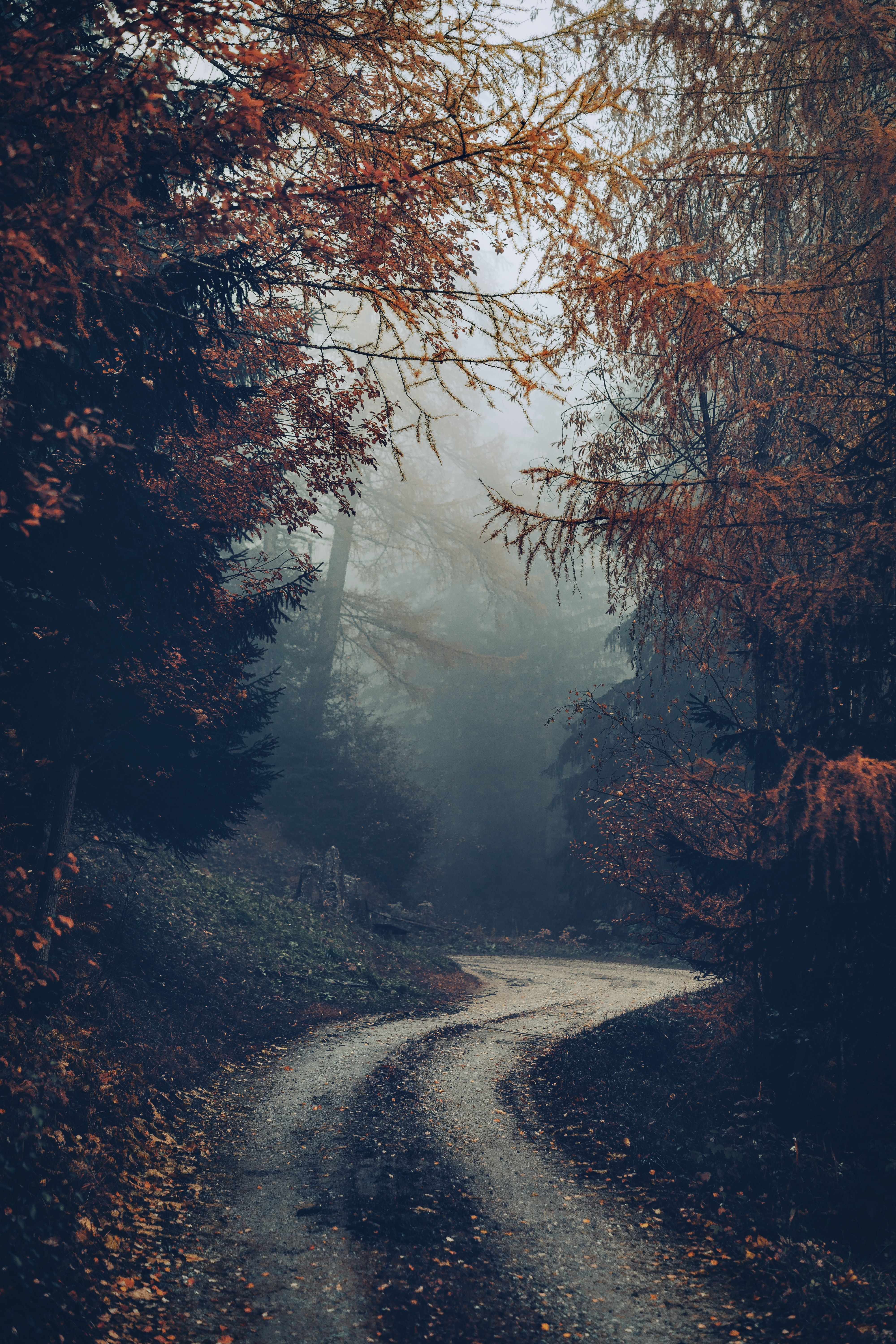 144756 free wallpaper 480x800 for phone, download images Nature, Trees, Autumn, Road, Forest, Fog 480x800 for mobile