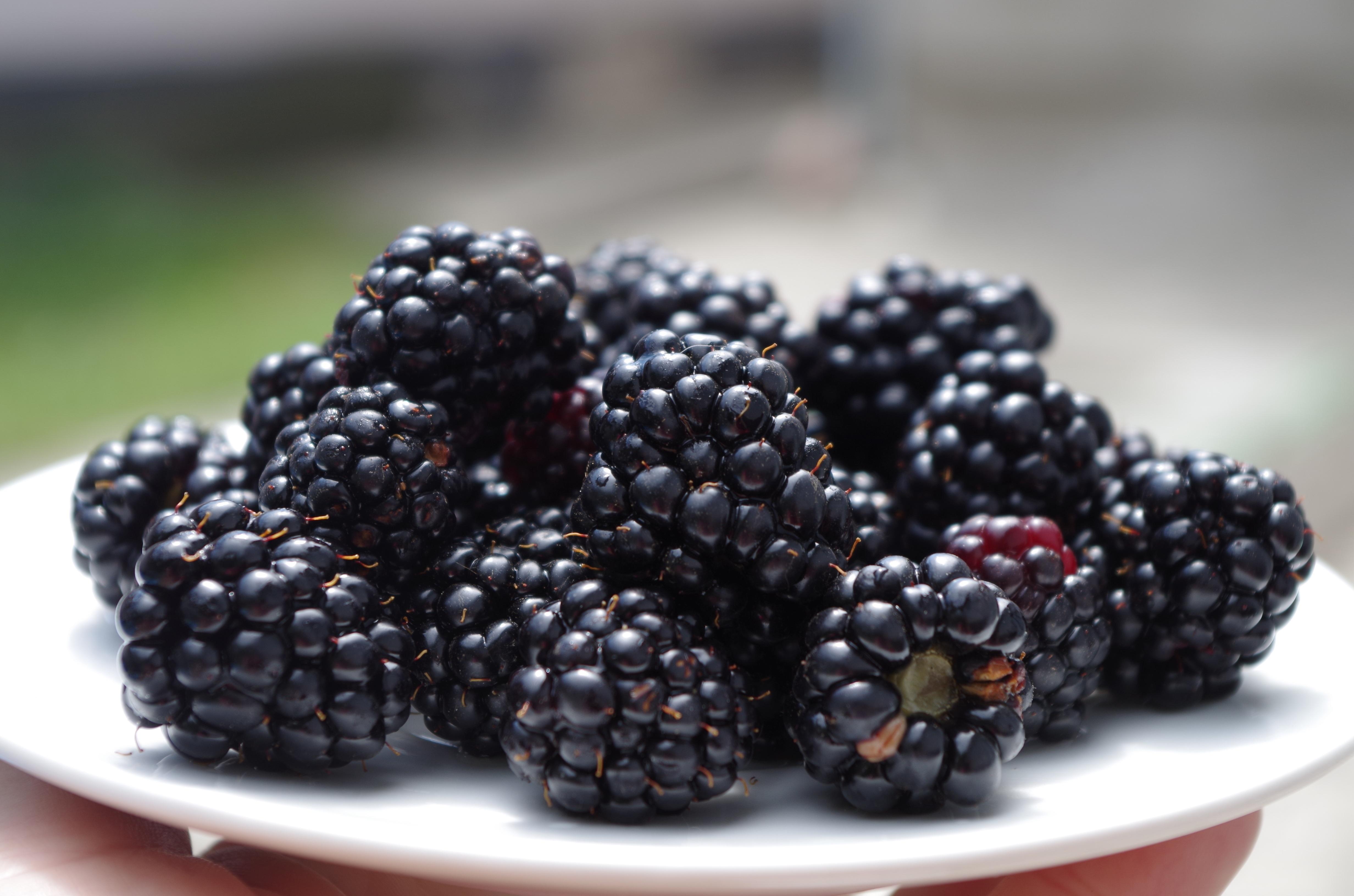 66773 Hintergrundbild herunterladen Berries, Lebensmittel, Blackberry, Teller, Reif - Bildschirmschoner und Bilder kostenlos