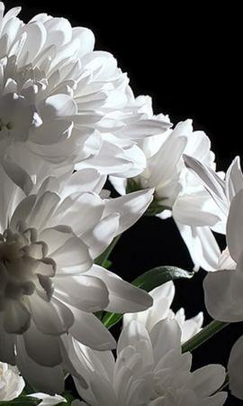 43174 télécharger le fond d'écran Plantes, Fleurs - économiseurs d'écran et images gratuitement