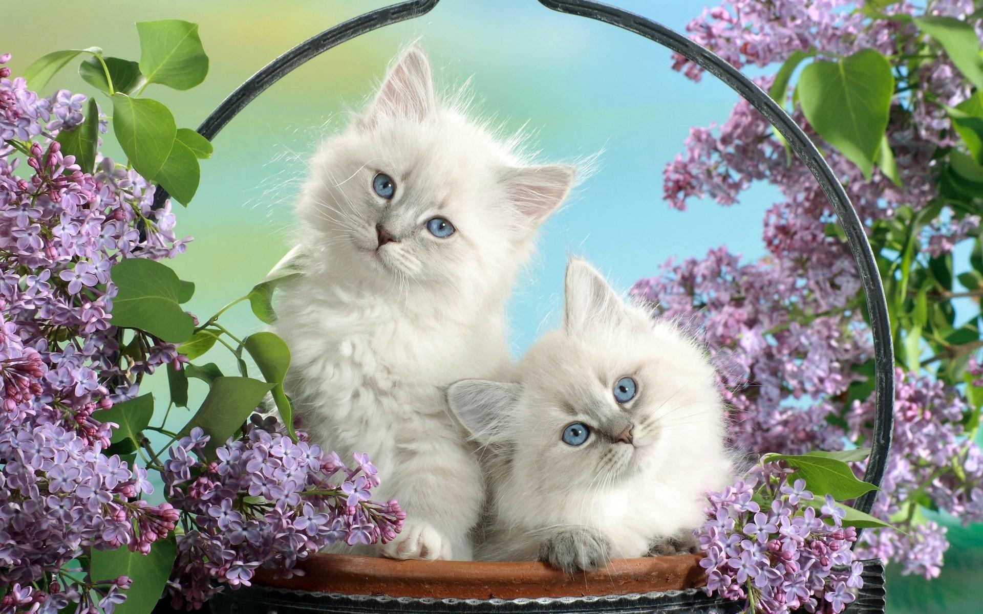 35337 descargar fondo de pantalla Animales, Gatos: protectores de pantalla e imágenes gratis