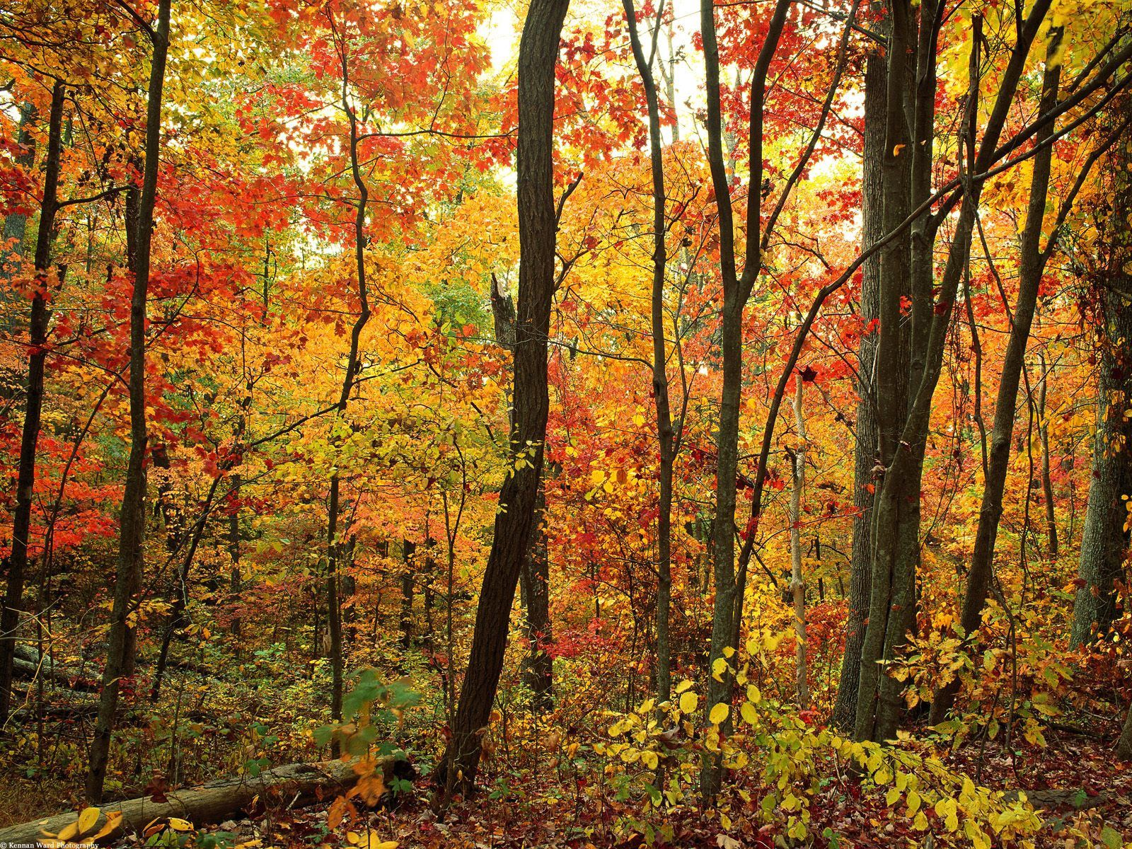 146616 Screensavers and Wallpapers Foliage for phone. Download Nature, Trees, Autumn, Forest, Foliage pictures for free