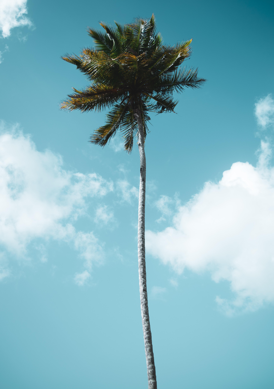 111312 免費下載壁紙 性质, 棕榈, 帕尔马, 木头, 热带, 热带地区, 天空, 云 屏保和圖片