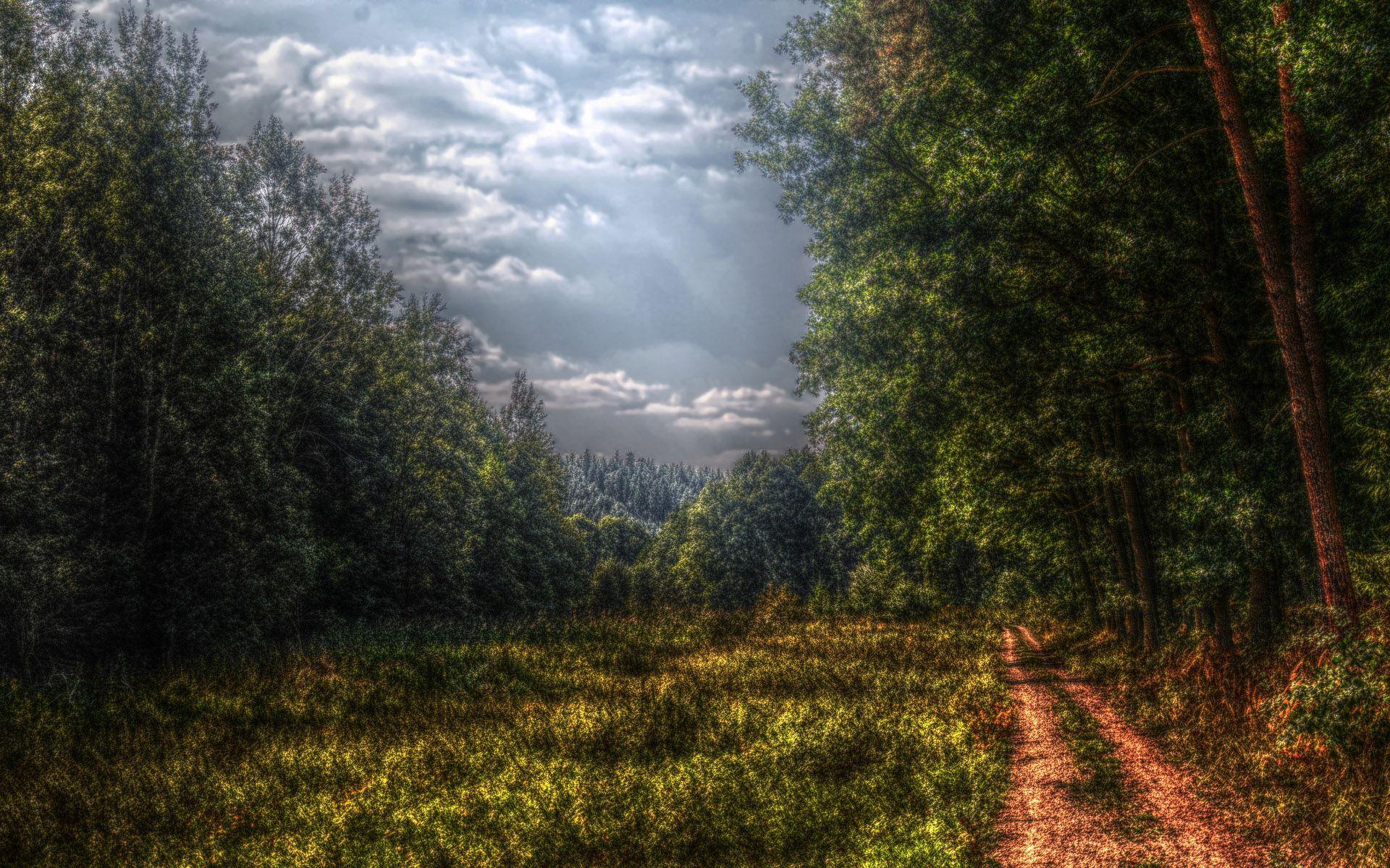 107966 скачать обои Поляна, Природа, Дорога, Лес, Цвета, Пасмурно, Мрачные, Тучи, Проселочная - заставки и картинки бесплатно
