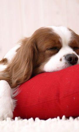 2795 descargar fondo de pantalla Animales, Perros: protectores de pantalla e imágenes gratis