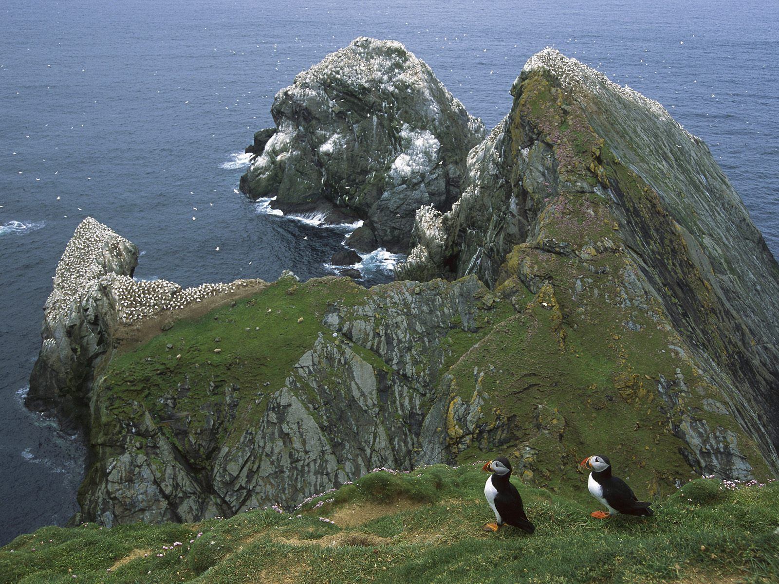118454 download wallpaper Nature, Shore, Bank, Rocks, Ocean, Pinguins, Seagulls screensavers and pictures for free