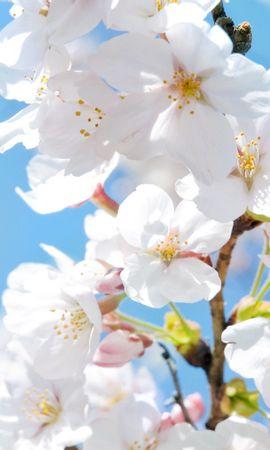 19002 скачать обои Растения, Цветы, Деревья - заставки и картинки бесплатно