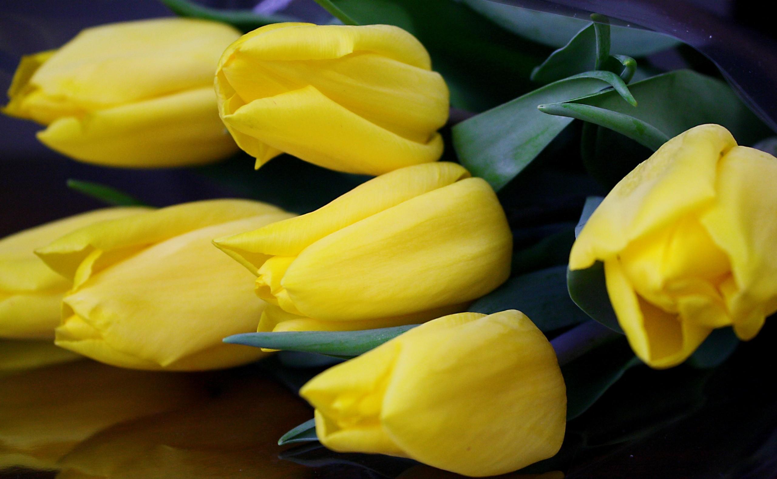 137906 descargar fondo de pantalla Flores, Tumbarse, Mentir, Tulipanes: protectores de pantalla e imágenes gratis