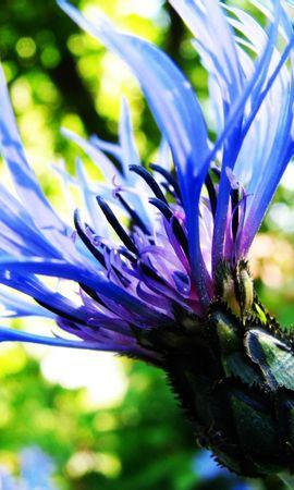 8356 скачать обои Растения, Цветы - заставки и картинки бесплатно
