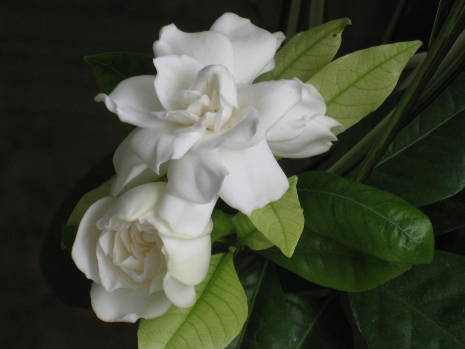 5584 скачать обои Растения, Цветы, Розы - заставки и картинки бесплатно