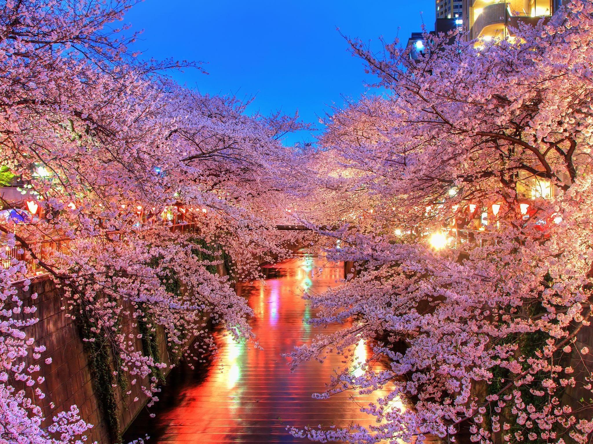 20738 скачать обои Пейзаж, Цветы, Река, Деревья - заставки и картинки бесплатно
