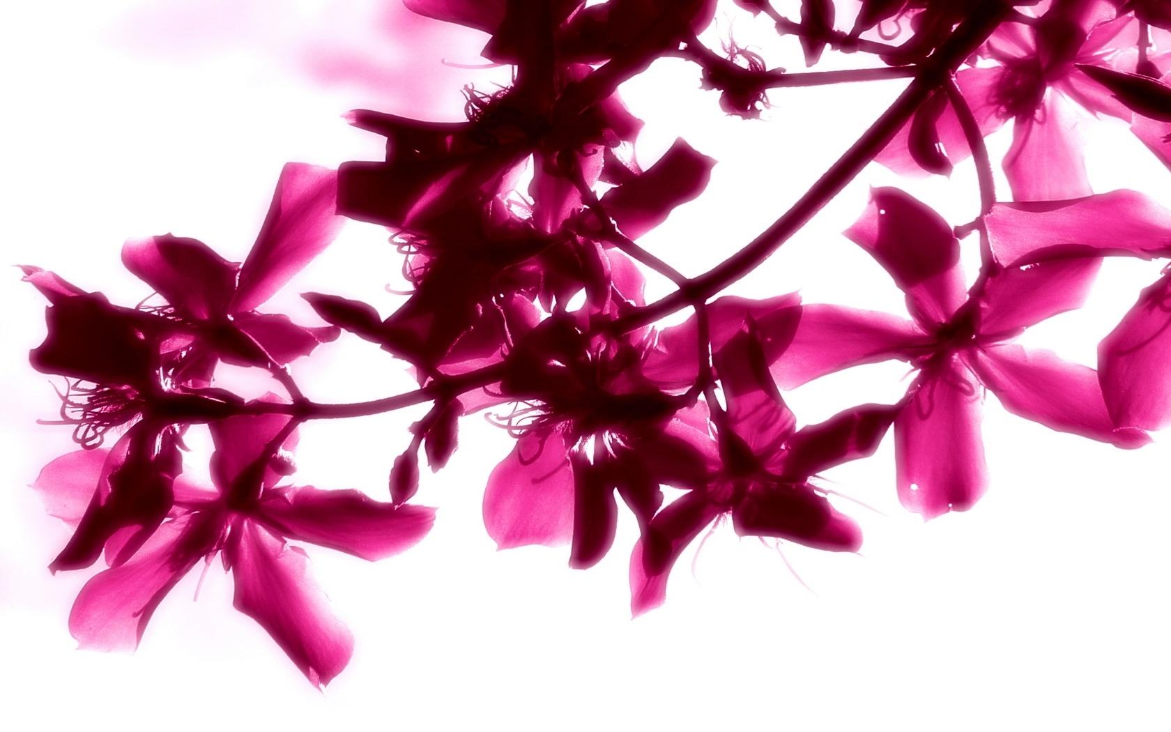 26047 скачать обои Растения, Цветы - заставки и картинки бесплатно
