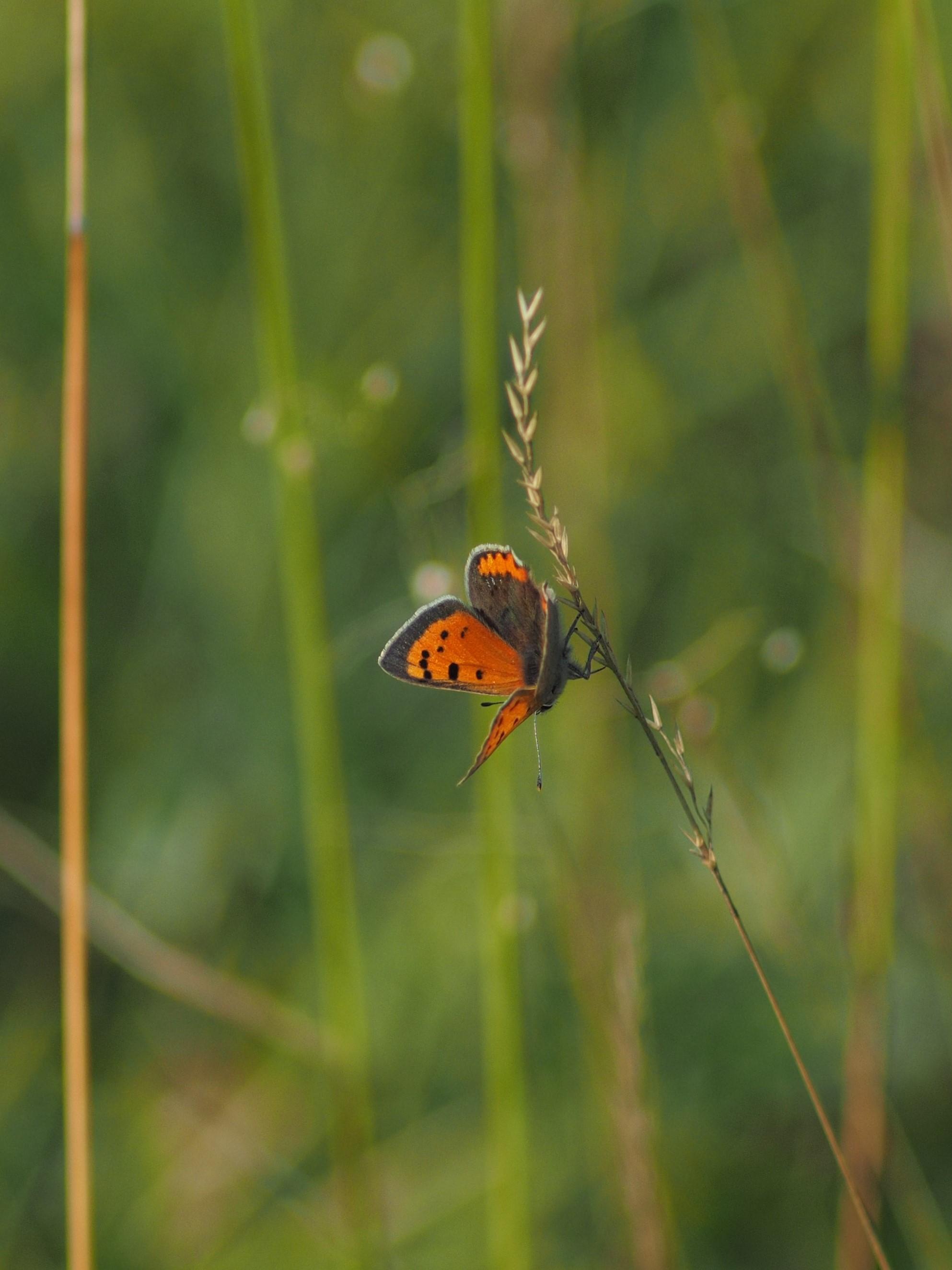 148561 скачать обои Животные, Бабочка, Крылья, Трава, Листья, Макро - заставки и картинки бесплатно