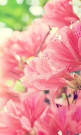 50266 descargar fondo de pantalla Plantas, Flores: protectores de pantalla e imágenes gratis