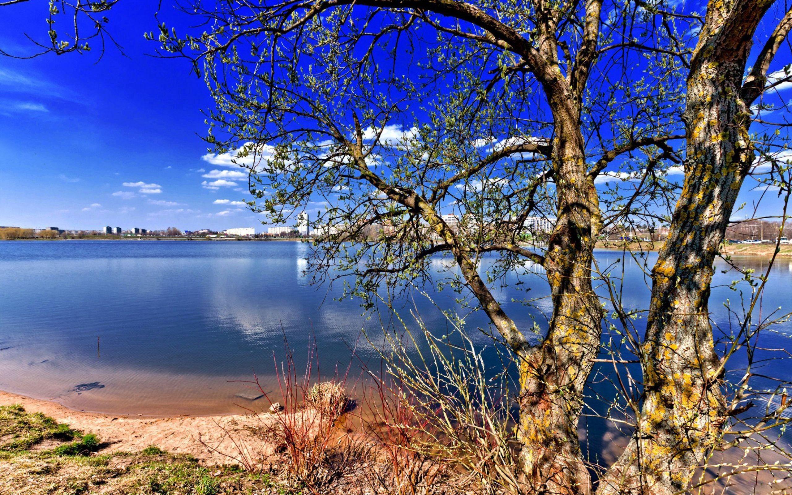 117242 Hintergrundbild herunterladen Natur, Flüsse, Holz, Baum - Bildschirmschoner und Bilder kostenlos