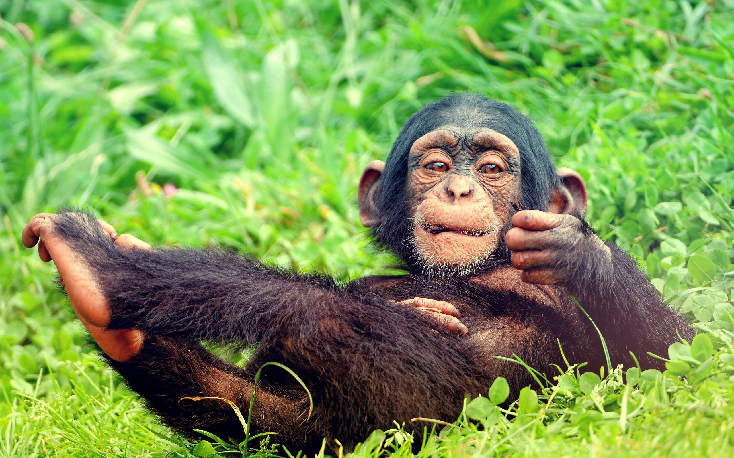 43186 Screensavers and Wallpapers Monkeys for phone. Download Animals, Monkeys pictures for free