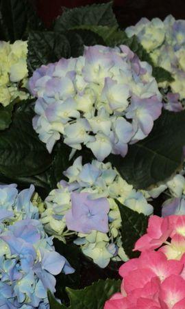41595 descargar fondo de pantalla Plantas, Flores: protectores de pantalla e imágenes gratis