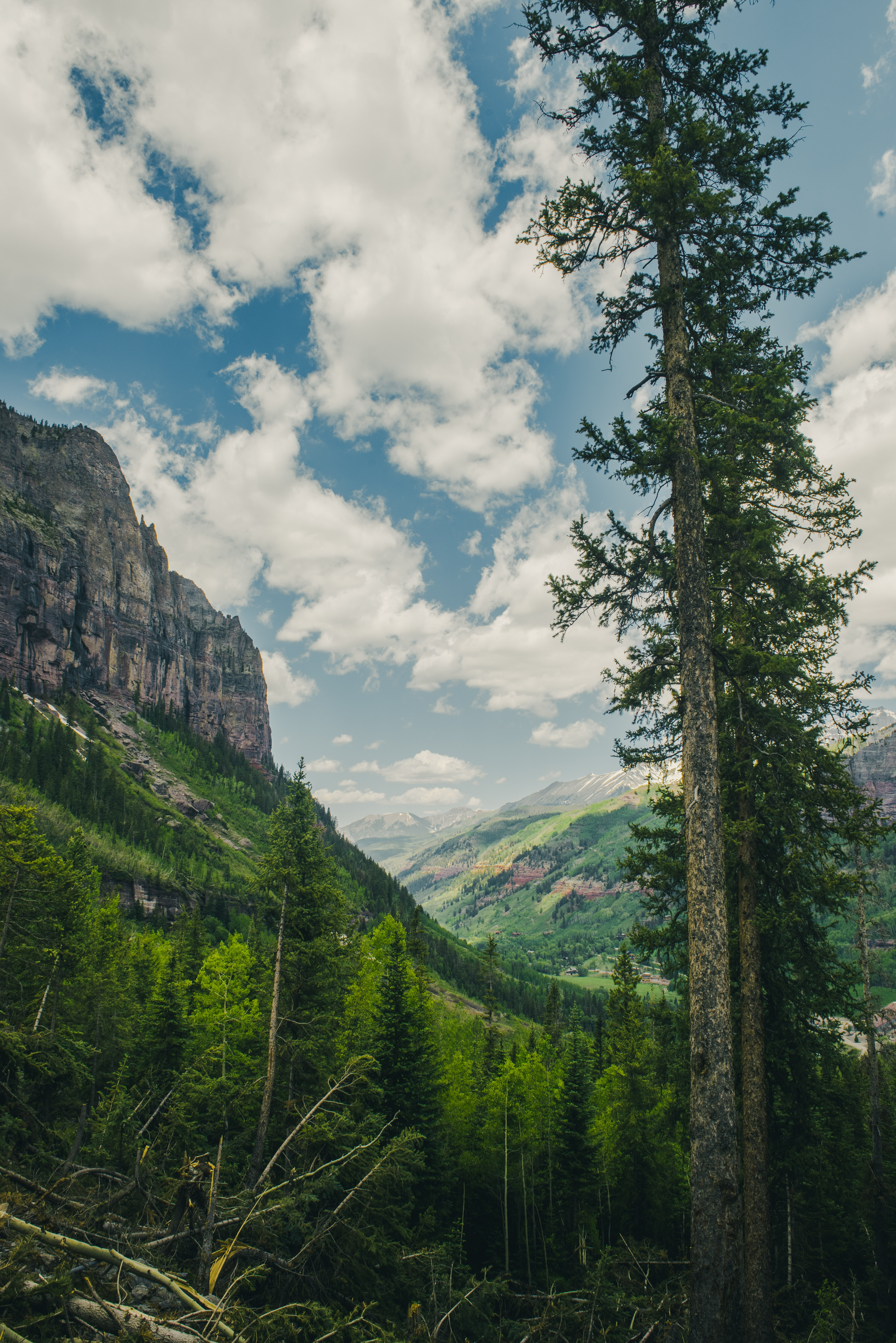 125695 скачать обои Природа, Деревья, Лес, Скалы, Горы, Пейзаж - заставки и картинки бесплатно