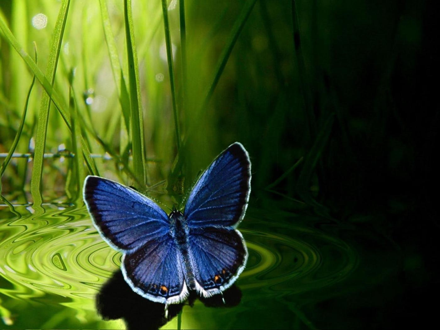 29405 скачать обои Насекомые, Бабочки - заставки и картинки бесплатно