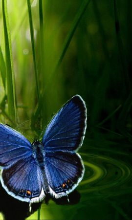 29405 Screensavers and Wallpapers Insects for phone. Download Butterflies, Insects pictures for free
