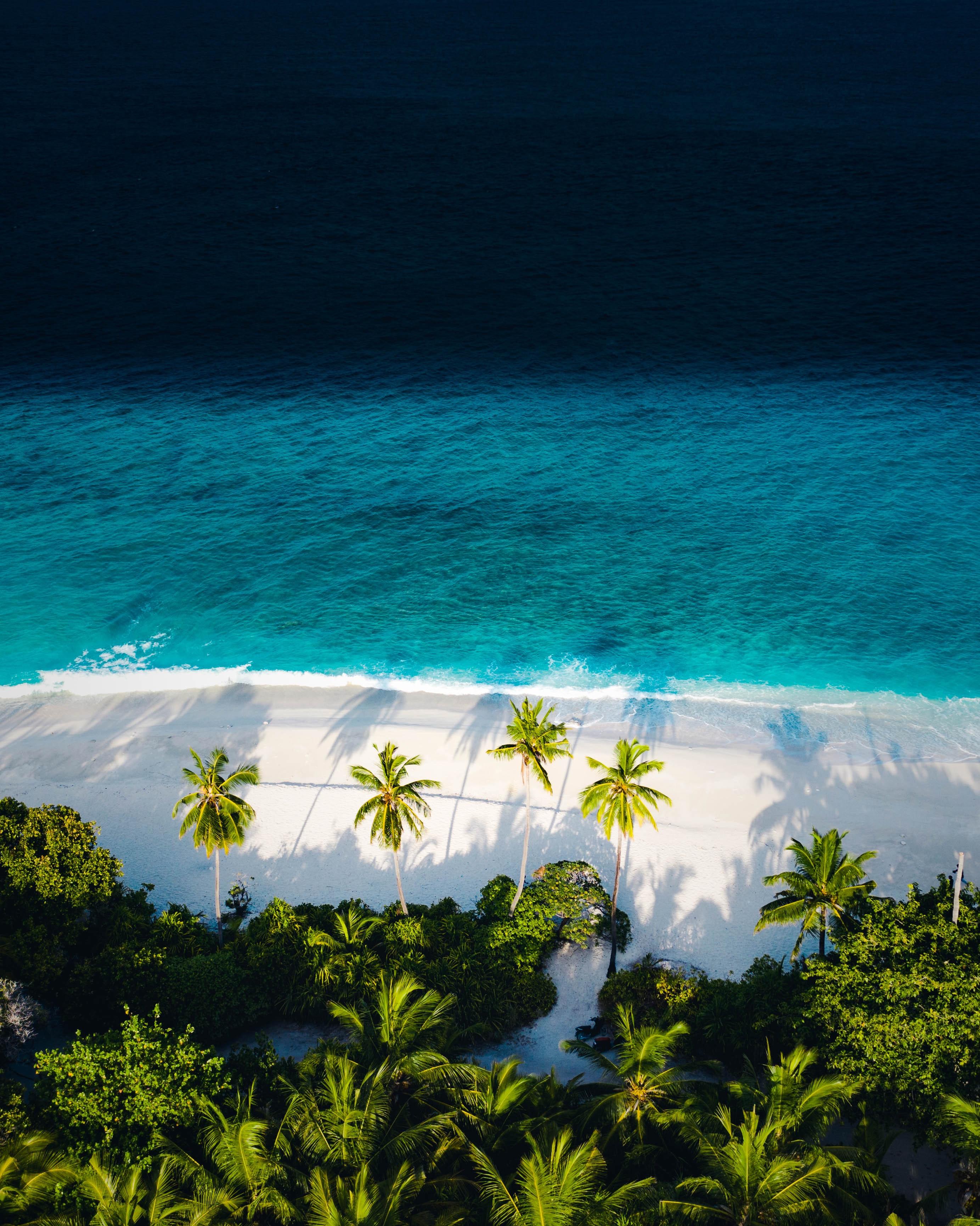 146554壁紙のダウンロード自然, ビーチ, 海, 上から見る, パームス-スクリーンセーバーと写真を無料で