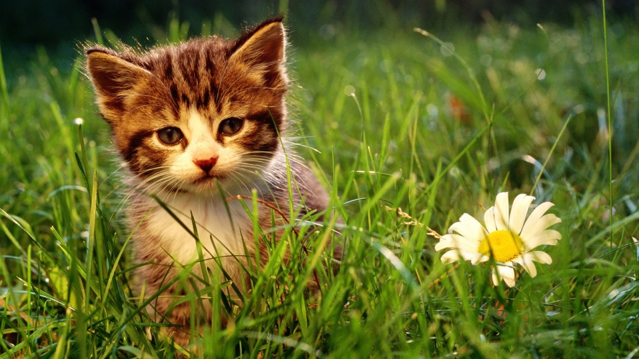 48846 download wallpaper Animals, Cats screensavers and pictures for free