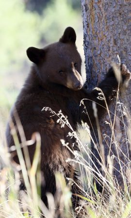 115756 Screensavers and Wallpapers Funny for phone. Download Animals, Brown Bear, Bear, Predator, Grass, Funny pictures for free