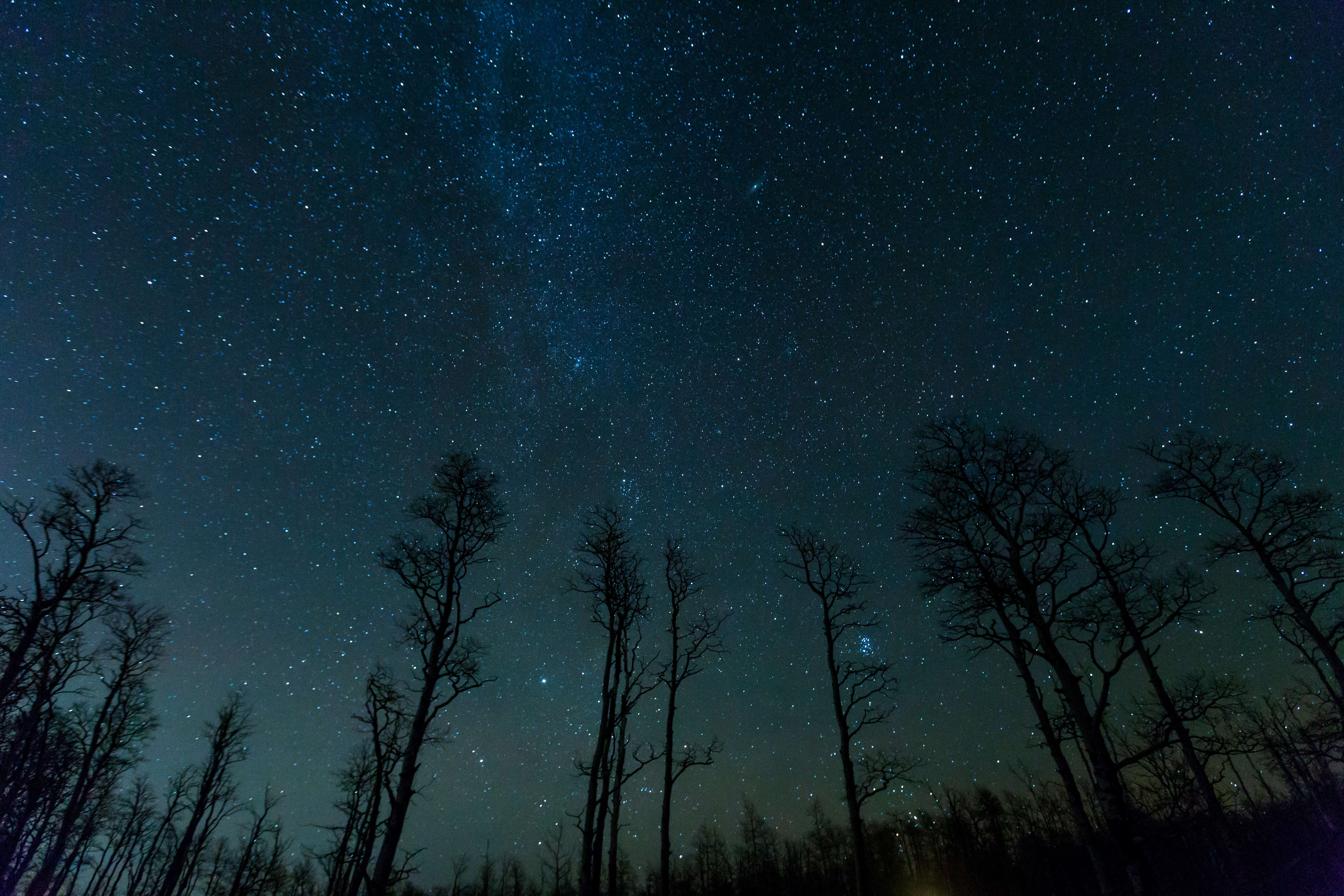 79087 download wallpaper Night, Nature, Trees, Stars, Starry Sky screensavers and pictures for free