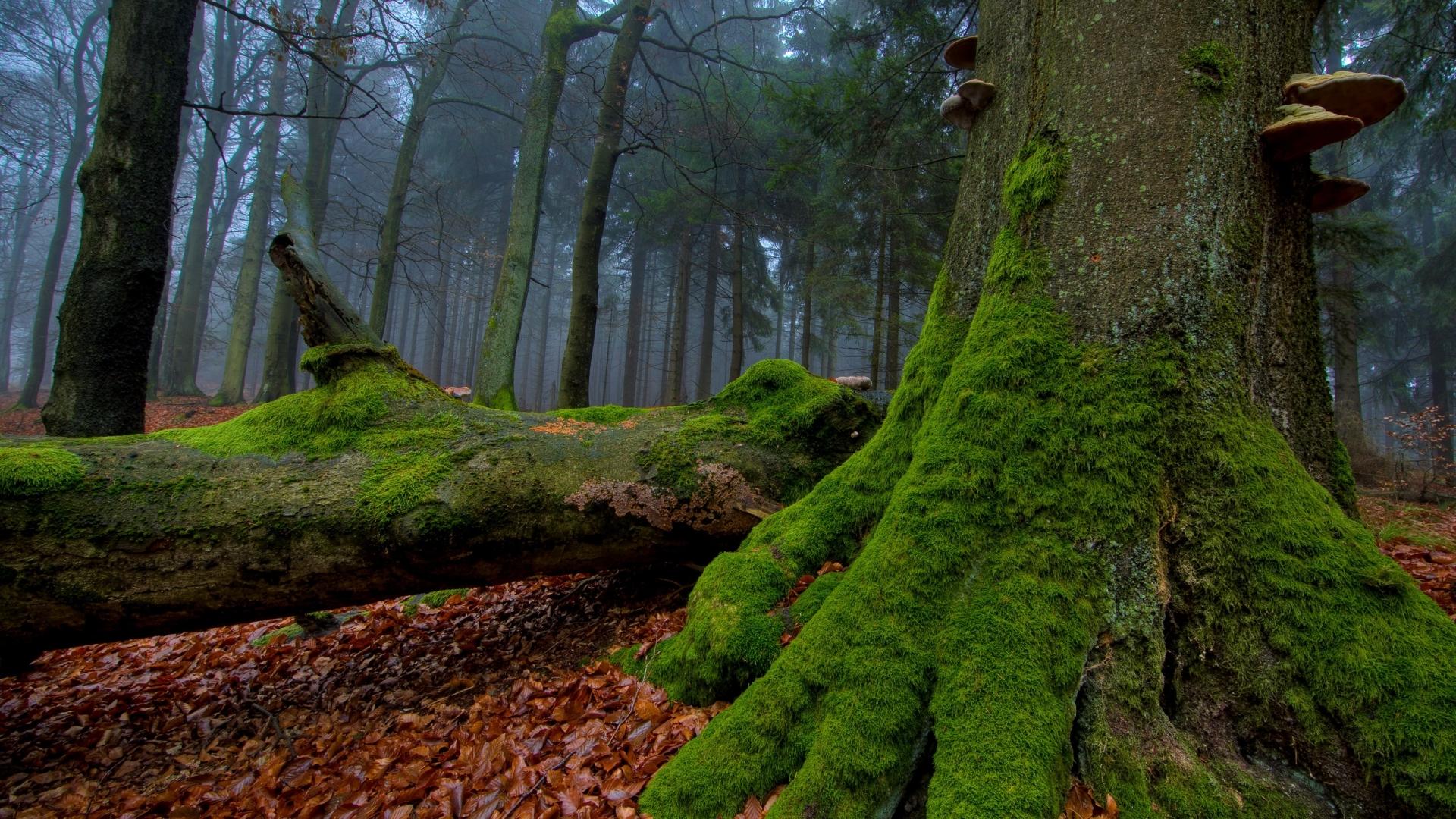 24574 скачать обои Растения, Пейзаж, Деревья, Осень, Листья - заставки и картинки бесплатно