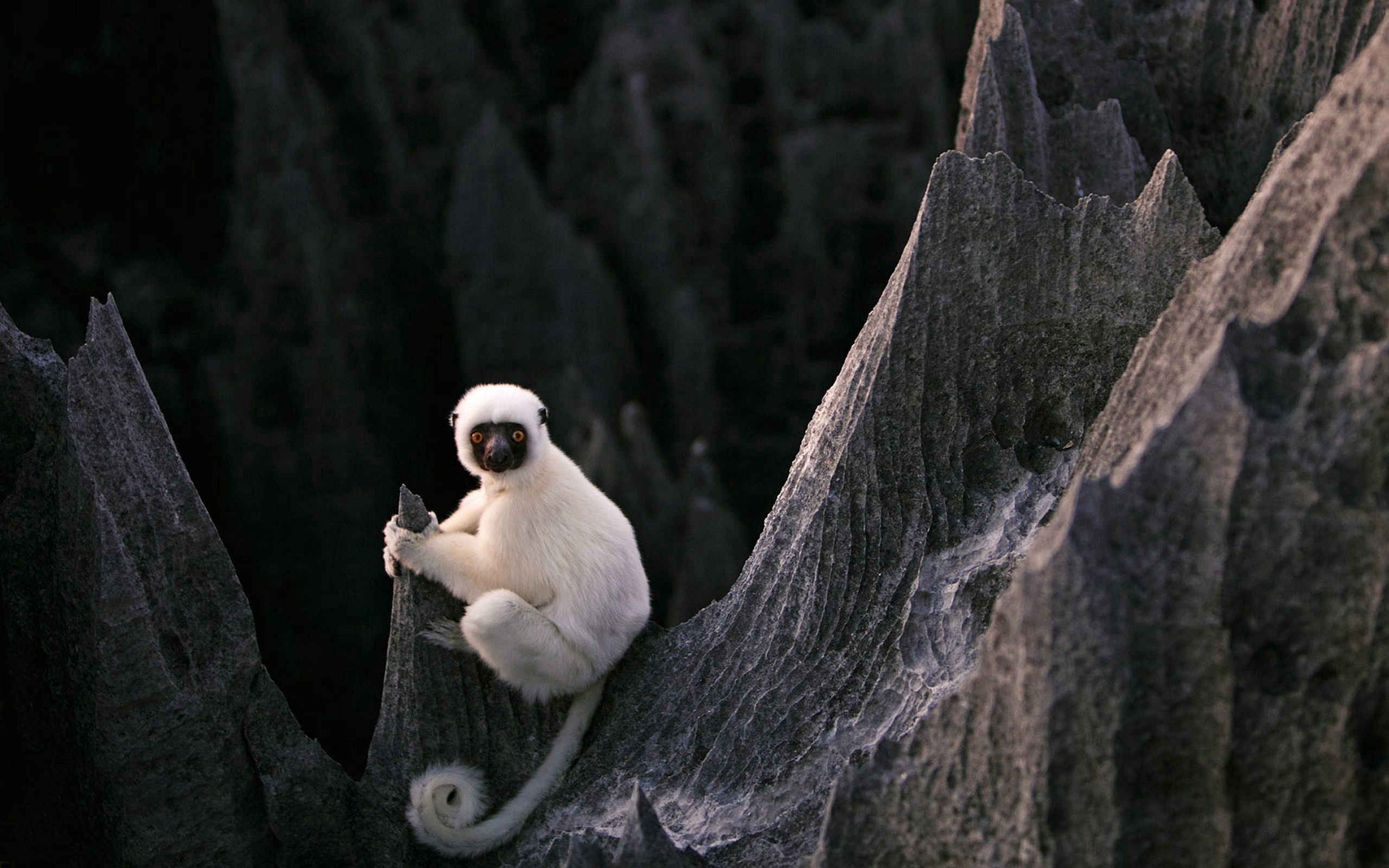 149355 download wallpaper Animals, Lemur, Sit, Stones screensavers and pictures for free
