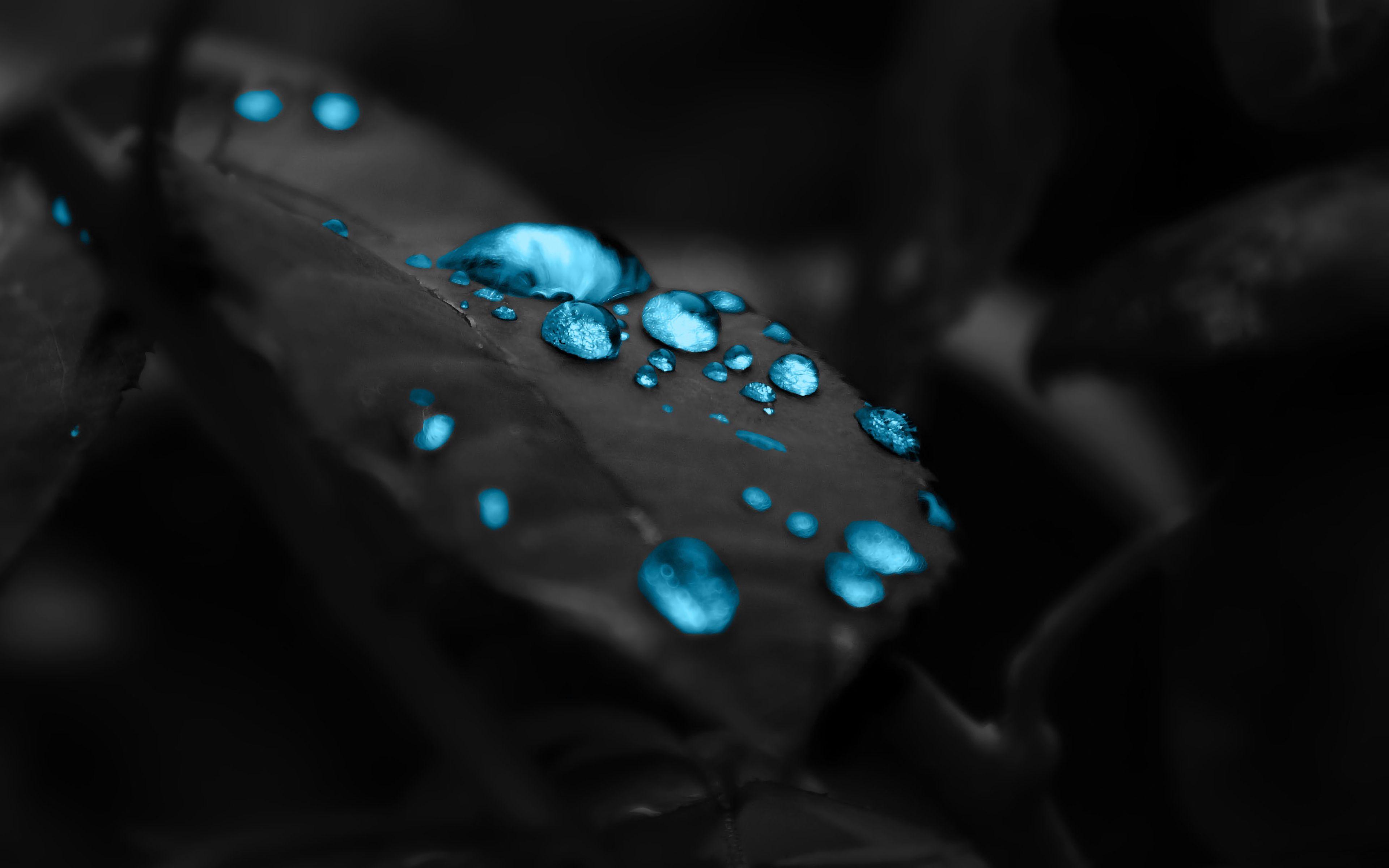 153088 Hintergrundbild herunterladen Drops, Makro, Blatt, Photoshop, Tau - Bildschirmschoner und Bilder kostenlos