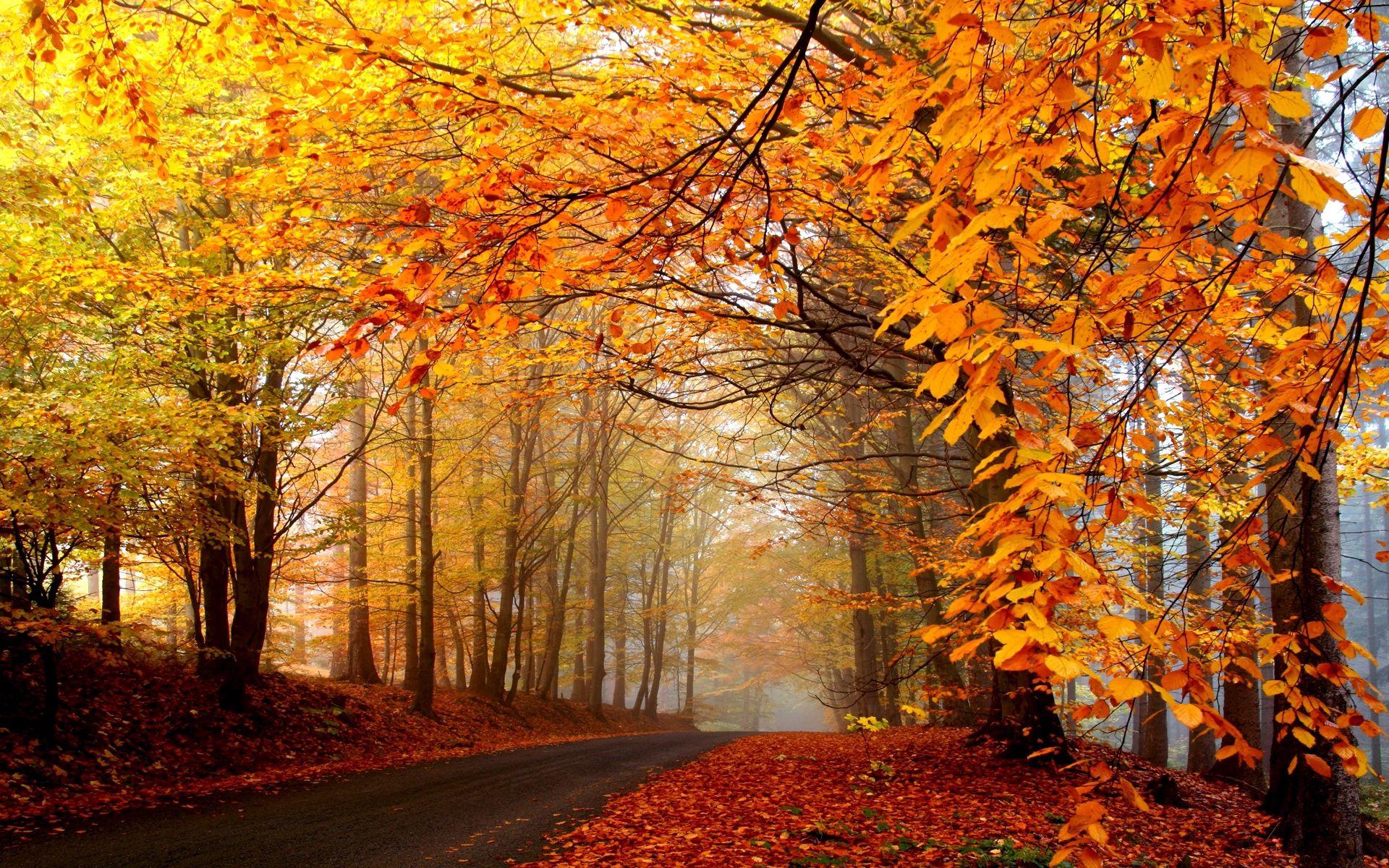 115524 Lade kostenlos Gelb Hintergrundbilder für dein Handy herunter, Natur, Bäume, Herbst, Blätter, Hell, Straße, Nebel, Asphalt, Dunst, Haze Gelb Bilder und Bildschirmschoner für dein Handy