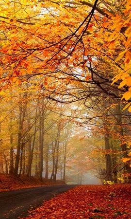 115524 скачать Желтые обои на телефон бесплатно, Природа, Осень, Деревья, Дорога, Туман, Дымка, Асфальт, Листья, Ярко Желтые картинки и заставки на мобильный