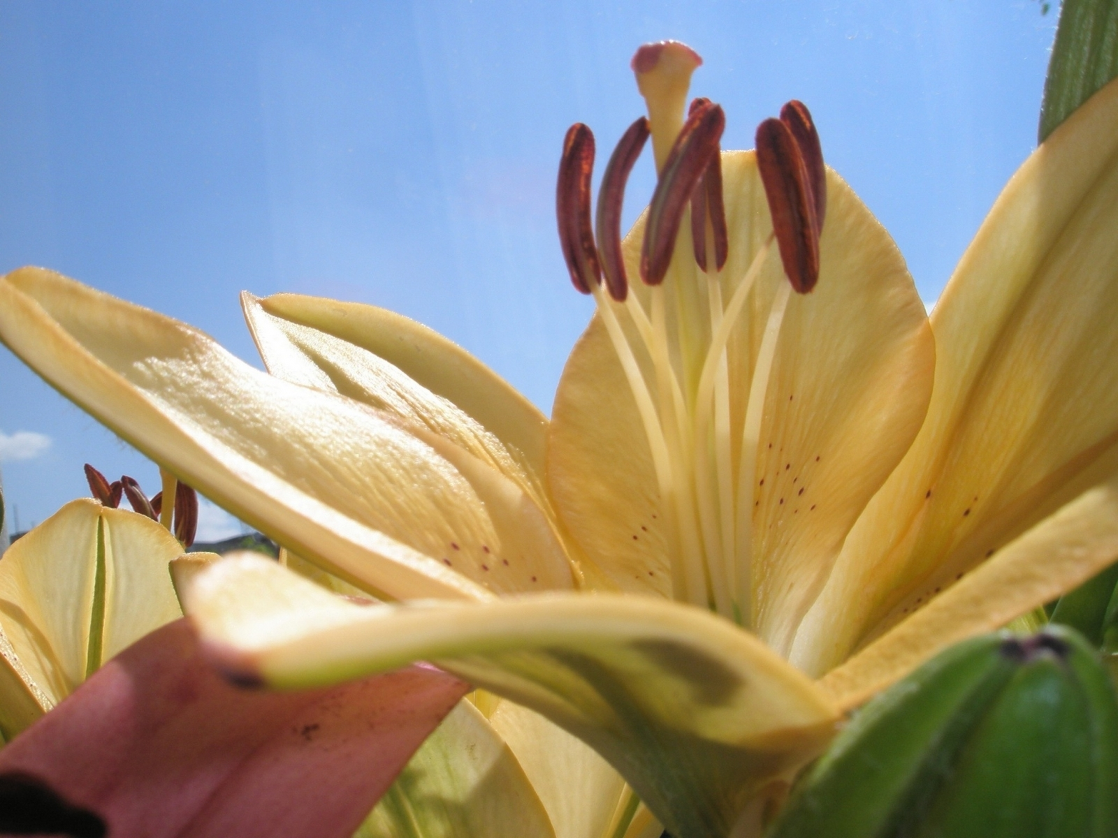 8920 скачать обои Растения, Цветы - заставки и картинки бесплатно