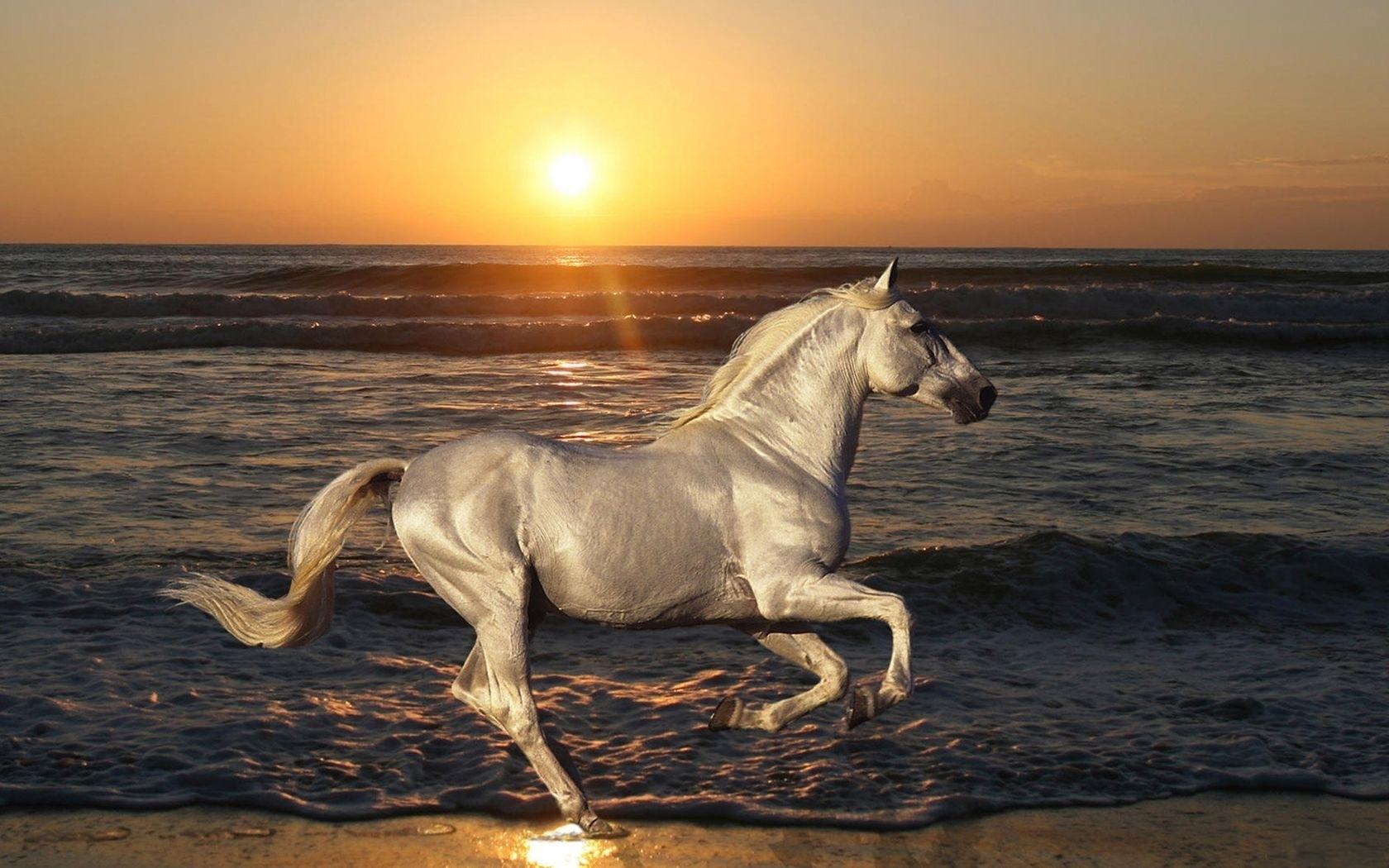 38220 скачать обои Животные, Лошади - заставки и картинки бесплатно