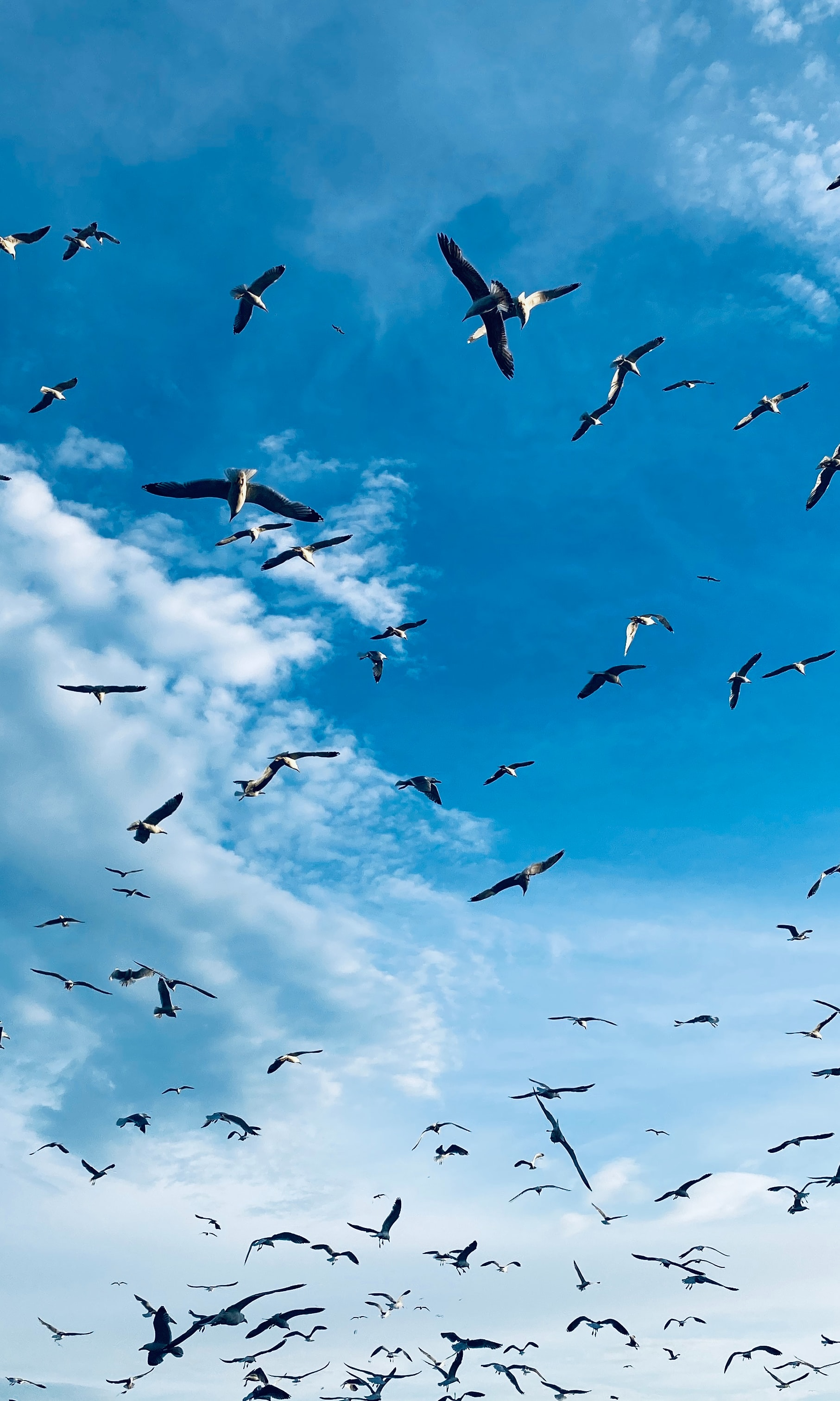 129644 download wallpaper Animals, Birds, Seagulls, Wings, Flock screensavers and pictures for free