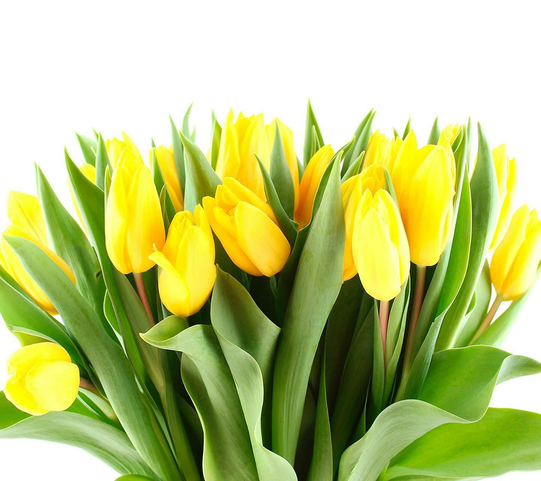 19396 скачать обои Растения, Цветы, Тюльпаны - заставки и картинки бесплатно