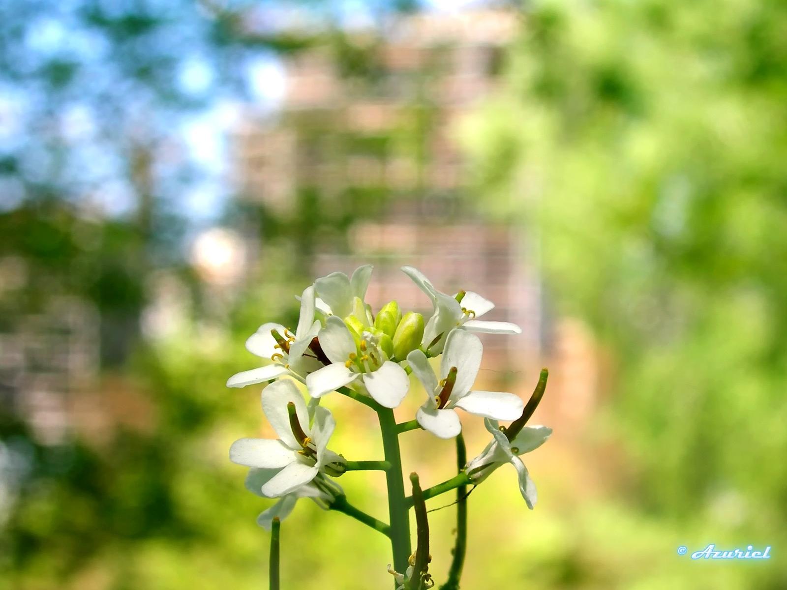 6650 скачать обои Растения, Цветы - заставки и картинки бесплатно