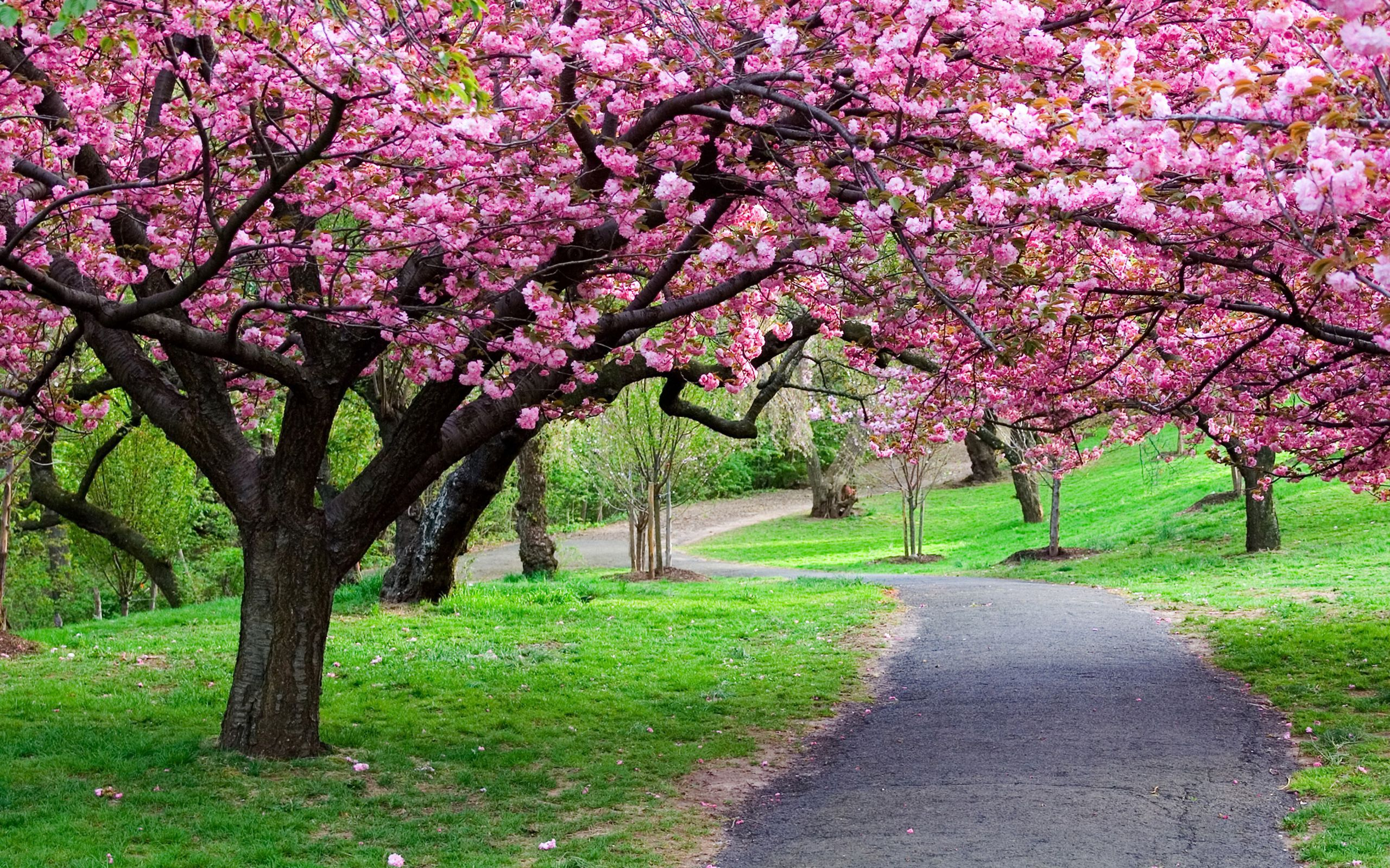 147002 free wallpaper 480x800 for phone, download images Nature, Flowers, Trees, Road, Path 480x800 for mobile